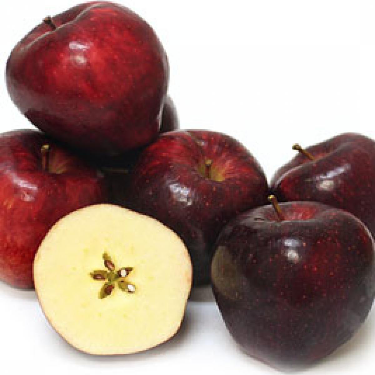 Сорт яблок ред чиф схема посадки